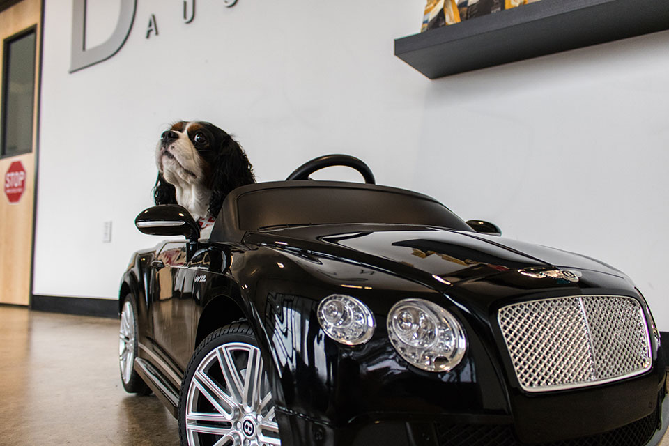 DChauffeur D Pet Hotels Austin - Bentley chauffeur